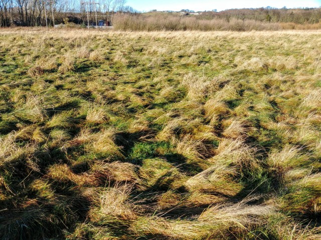 tanfield wetlands grass